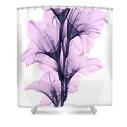 X-ray Of A Gladiola Flower Shower Curtain