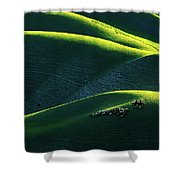Xin Jiang 01 Shower Curtain