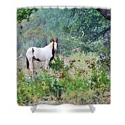 Horse0007 Shower Curtain