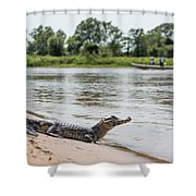 Yacare Caiman On Beach With Passing Boat Shower Curtain