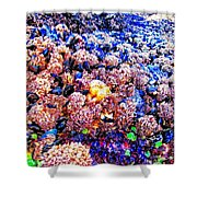Yachats Oregon - Low Tide Treasures Shower Curtain
