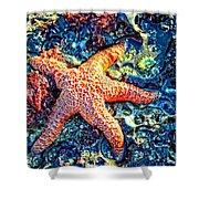 Yachats Oregon - Sea Star Shower Curtain