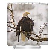 Yakama Canyon Eagle Shower Curtain