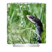 Yard Snake Shower Curtain