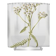 Yarrow Shower Curtain