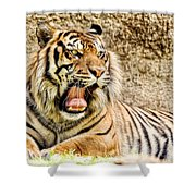 Yawning Bengal Tiger Shower Curtain