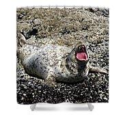 Yawning Harbor Seal - Oregon Coast Shower Curtain