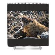 Yawning Marmot Shower Curtain
