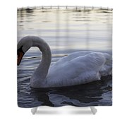 Ydan S Dream Shower Curtain