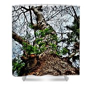 Ye Ole Tree At Chichen Itza Shower Curtain