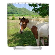 Yearling Colt In The Pasture Shower Curtain