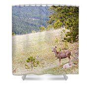 Yearling Mule Deer In The Pike National Forest Shower Curtain