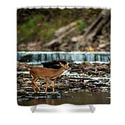Yearling On Indian Creek Shower Curtain