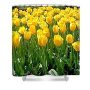 Yelllow Tulip Garden Shower Curtain