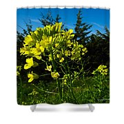 Yellow Against Blue Shower Curtain