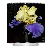 Yellow And Blue Iris Shower Curtain