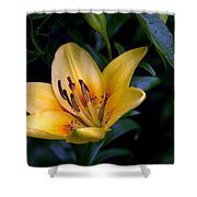 Yellow And Green No. 2 Shower Curtain
