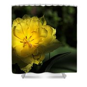 Yellow And Green No. 3 Shower Curtain
