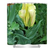 Yellow And Green Striped Tulip Flower Bud Shower Curtain
