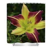 Yellow And Marron Flowering Lily In A Garden Shower Curtain