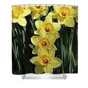 Yellow And Orange Daffodil  #2 Shower Curtain
