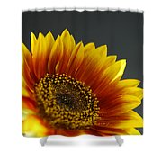Yellow And Orange Gerber Shower Curtain