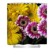 Yellow And Pink Gerbera Daisies Shower Curtain