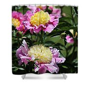 Yellow And Pink Peony Shower Curtain