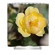 Yellow And Pink Tipped Rose Shower Curtain