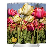Yellow And Pink Tulips V 2018 Shower Curtain