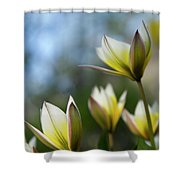 Yellow And Purple Two Shower Curtain