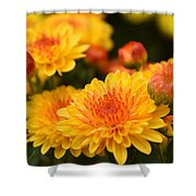 Yellow And Red Autumn Mums Closeup I Shower Curtain