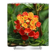 Yellow And Red Flowers On A Branch Shower Curtain