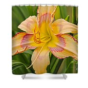 Yellow And Red Lily Shower Curtain