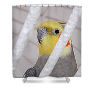 Yellow And Red On White Shower Curtain