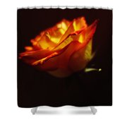 Yellow And Red Rose Shower Curtain