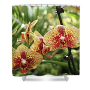 Yellow And Red Spotted Phalaenopsis Orchids Shower Curtain