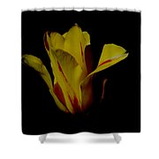 Yellow And Red Tulip Shower Curtain