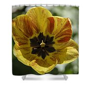 Yellow And Red Tulip Center Squared Shower Curtain