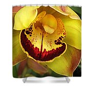 Yellow And Russet Orchid Shower Curtain
