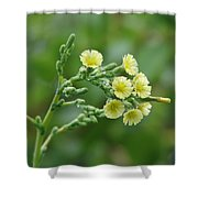 Yellow And Small Shower Curtain