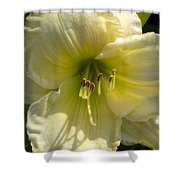 Yellow And White Daylily Shower Curtain