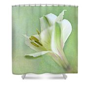 Yellow And White Peruvian Lily Shower Curtain