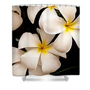 Yellow And White Plumeria Shower Curtain