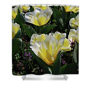 Yellow And White Tulips Flowering In A Garden Shower Curtain