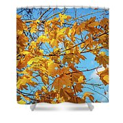 Yellow Autumn Leaves 2 Shower Curtain