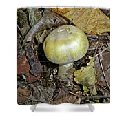 Yellow Autumn Mushroom Shower Curtain