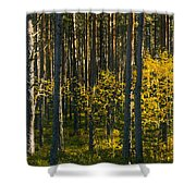 Yellow Autumn Trees In Forest Shower Curtain