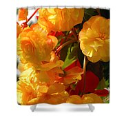 Yellow Begonia Flowers.  Victoria Shower Curtain