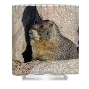 Yellow-bellied Marmot Poses For Pictures Shower Curtain
